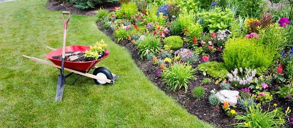 garden in yard